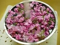 桜の花を、たっぷりの水で洗う
