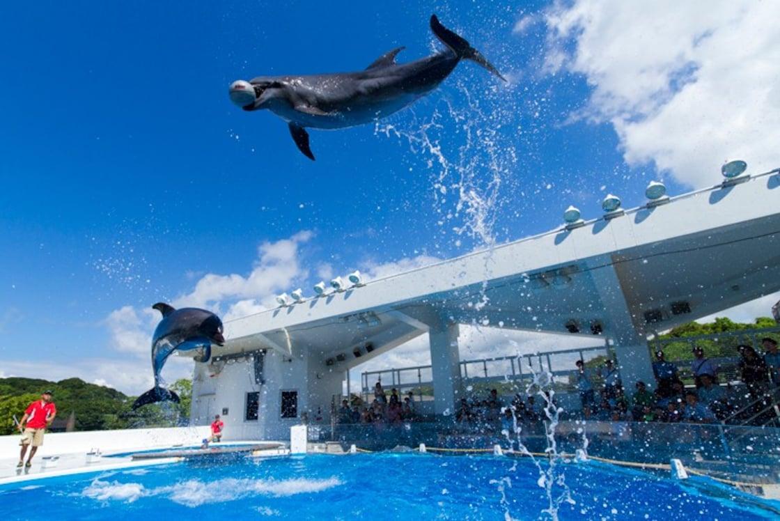 九十九島水族館「海洋KIRARA」