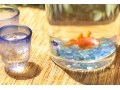 金魚の通信販売サイトおすすめ3選