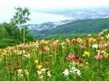 絶景! 北海道・小樽のオーンズ春香山ゆり園