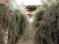 鎌倉の萩の花の美しいお寺めぐりと、奇祭・面掛行列