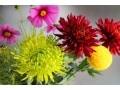 美しい花の写真を簡単に撮る方法