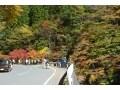 埼玉一美しい紅葉!秩父・中津峡で秋の絶景&味覚巡り