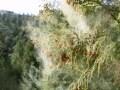 【2020年版】スギ・ヒノキ花粉飛散量予想と対策…去年との比較も