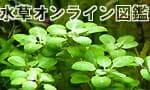 水草オンライン図鑑 60種掲載、全画像付き