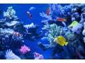 種類別・熱帯魚図鑑オンライン