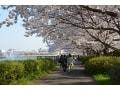 埼玉のお花見におすすめ!桜の名所10選【2018年】