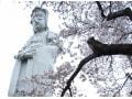群馬の桜名所10選!おすすめお花見スポット2018