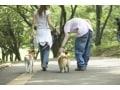 歩数計アプリで毎日の散歩をもっと楽しくしよう!
