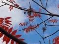 紅葉を求め、向島百花園、そしてレトロな商店街を歩く