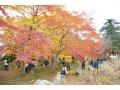 埼玉の紅葉名所・嵐山渓谷 秋色グラデーションを堪能
