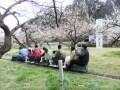 梅の名所・越生梅林の見ごろはいつ?梅まつり2018