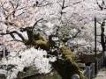 街の魅力を享受する「プラウド桜新町」