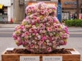 桜新町で遅咲きの桜を鑑賞し御朱印をもらい豪徳寺へ