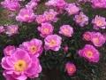 リニューアル!日比谷花壇大船フラワーセンターの見所
