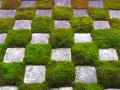 京都・東福寺の観光!歴史や見どころ、アクセス