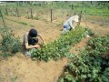 体験農園とは?週末マイファームから始める田舎暮らし