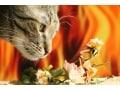 猫にとって毒・危険な植物!食べてはいけない植物リスト