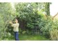 庭木の剪定を自分でやる基本の方法と整枝のコツ