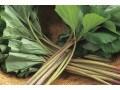 ふき(蕗)の栄養素…アクや苦みの成分に注目!