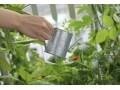 植物の水やりの基本、時間と方法は?