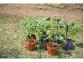 家庭菜園の農薬の種類と使い方