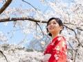 桜柄の着物は1年中着られるって本当?マナーとコーデ