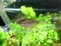 熱帯魚を水槽に入れる前にすべきこと