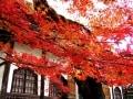 鎌倉の紅葉名所 2018年の見ごろ・混雑を避ける方法