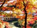 北鎌倉の紅葉散歩2018 名所や穴場はんなり散策ルート