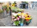 湯あげのやり方……お花屋さんが行う花の確実な水揚げ方法