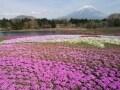 雄大な富士山を眺める絶景スポット8選