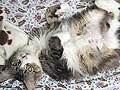 猫の避妊手術・去勢手術 方法や流れと注意点