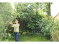 庭木の剪定の仕方【自分でできる剪定のやり方 基礎編】