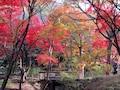 空に赤、地に黄色─紅葉の三溪園