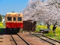 桜のトンネルを走り抜けるお花見列車