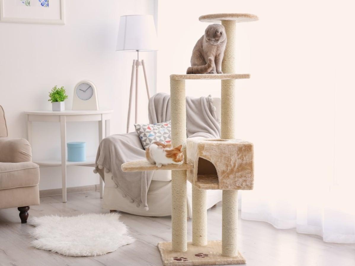 猫が落ち着く部屋づくり!猫が喜ぶ部屋の4つのポイント