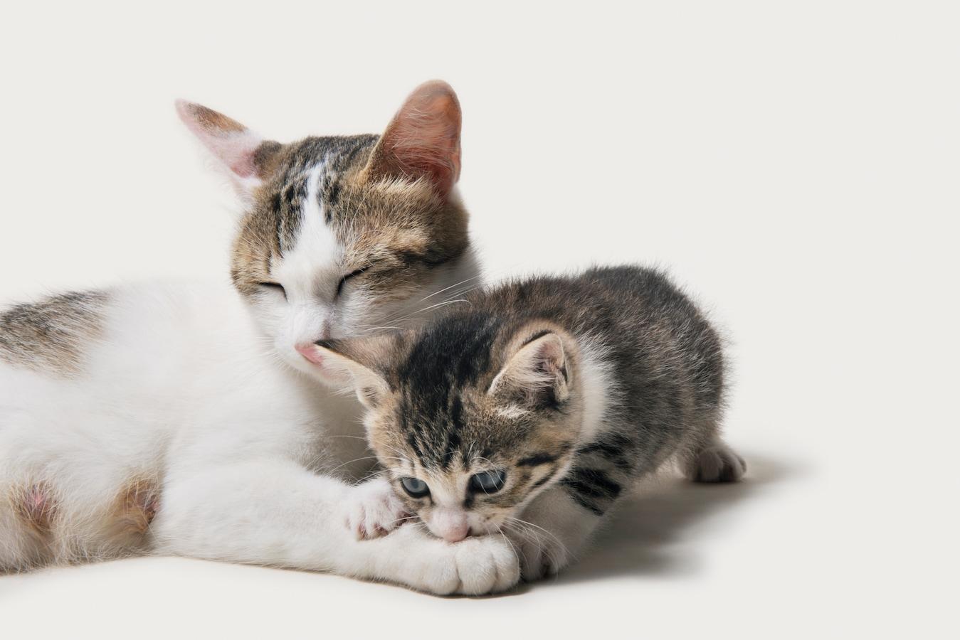 子猫 噛む 対策