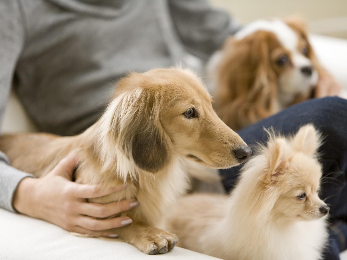 犬が喜ぶマッサージの仕方 基本方法 ツボをプロが伝授 犬 All About