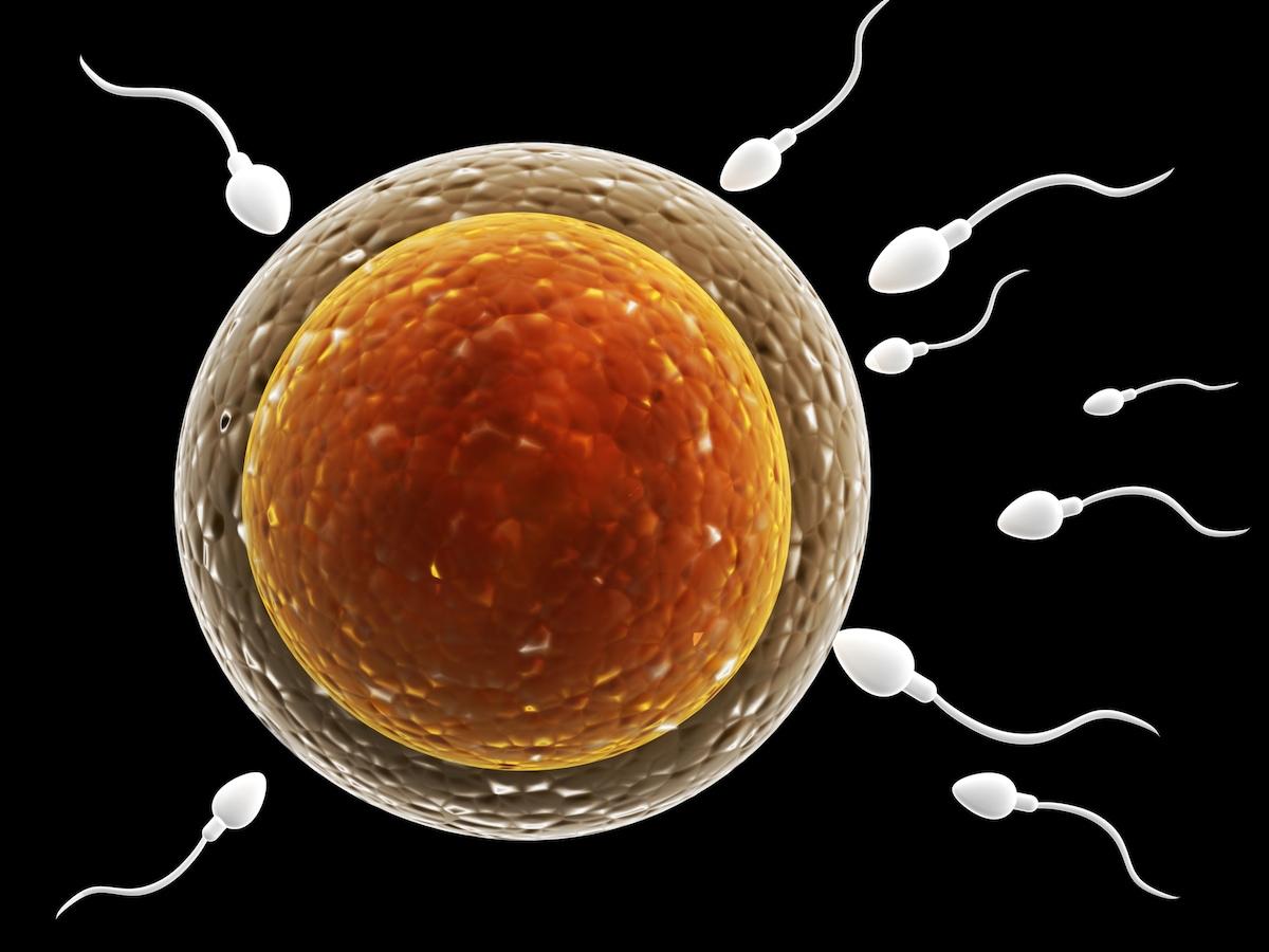 妊娠超初期 イライラ