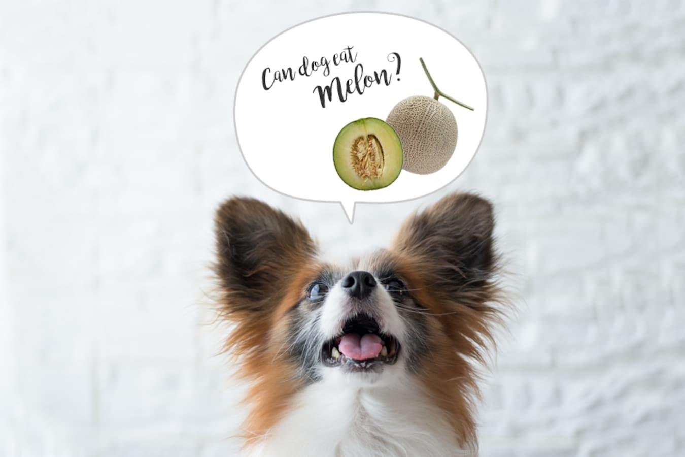 犬 メロン 食べ れる