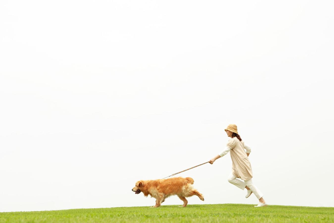 散歩 嫌がる 犬