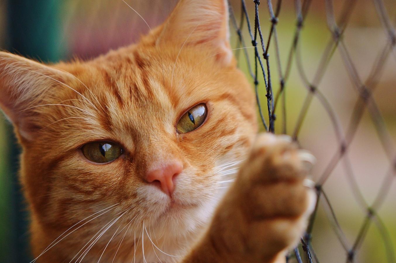 て 猫 いけない 食べ もの は