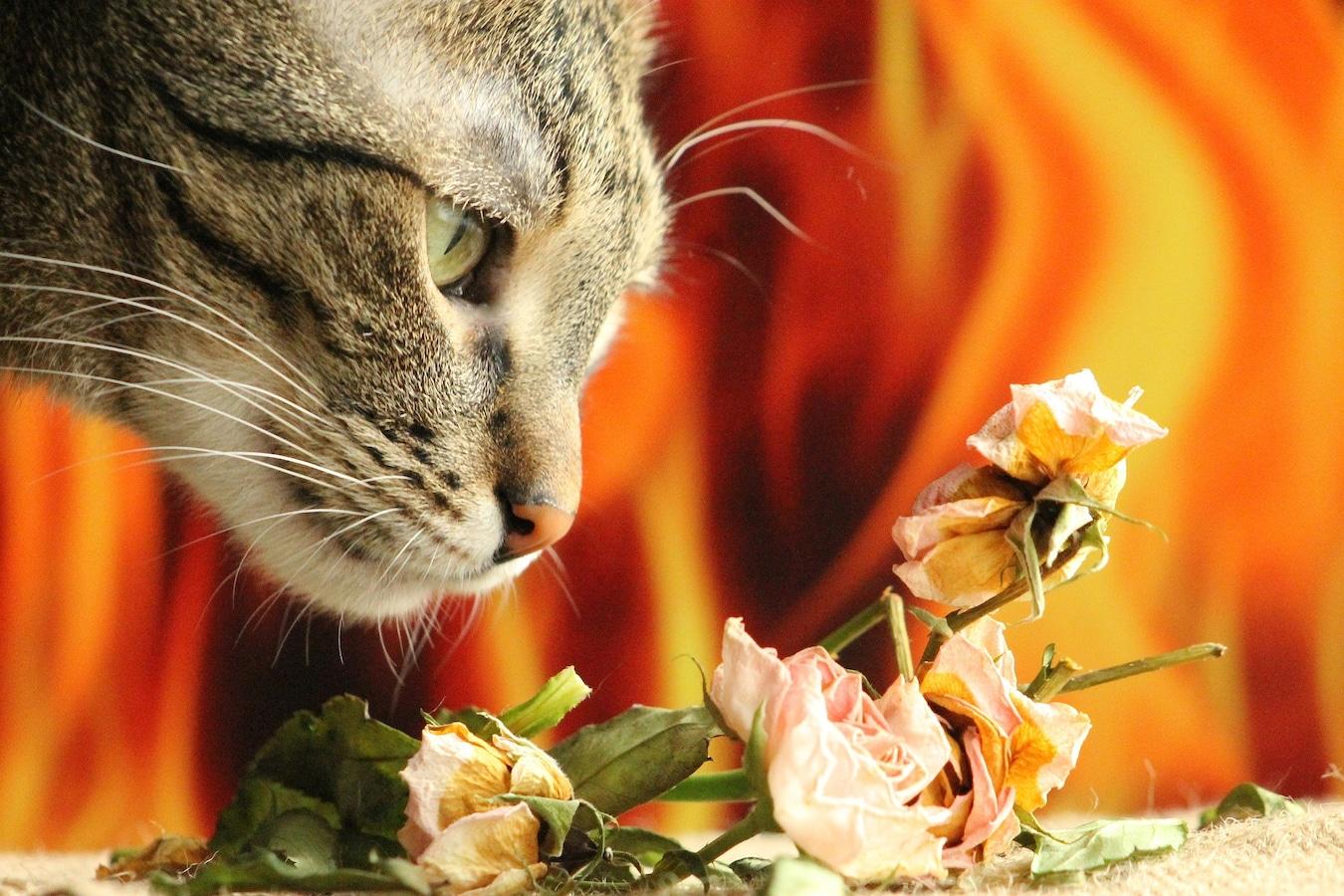 が 食べ いけない は もの て 猫