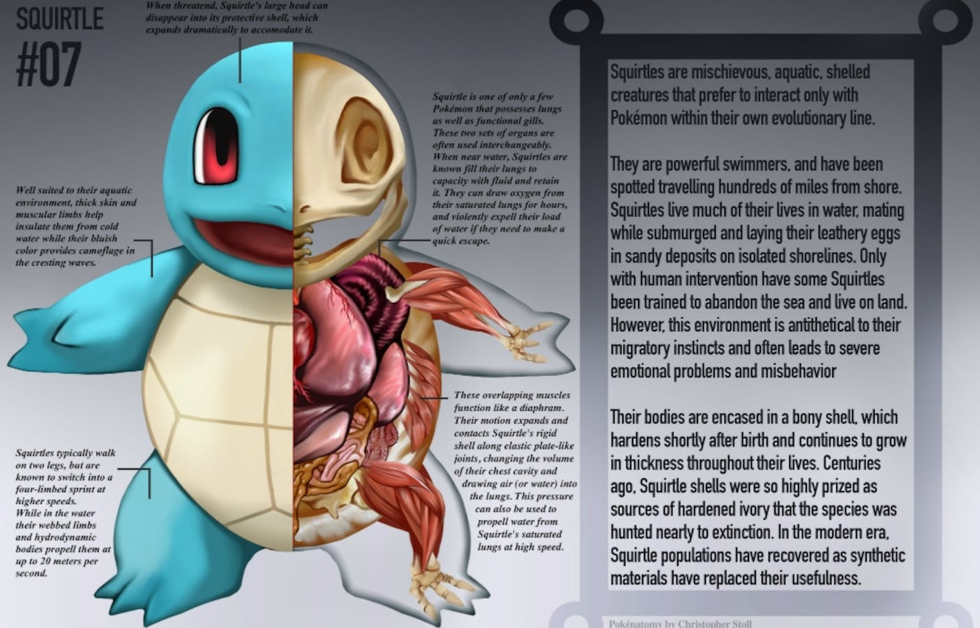 Learn About Anatomy Through Pokmon All About Japan