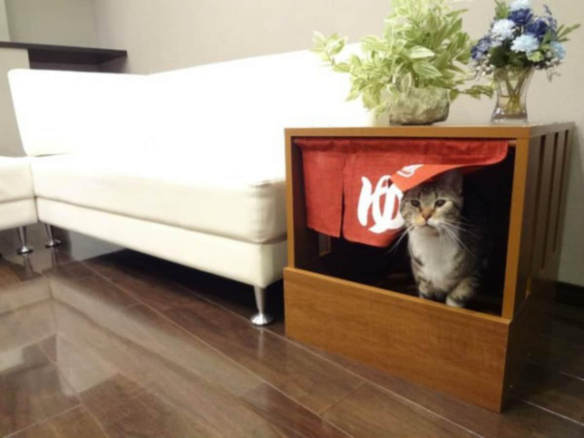 Cat litter box trouble
