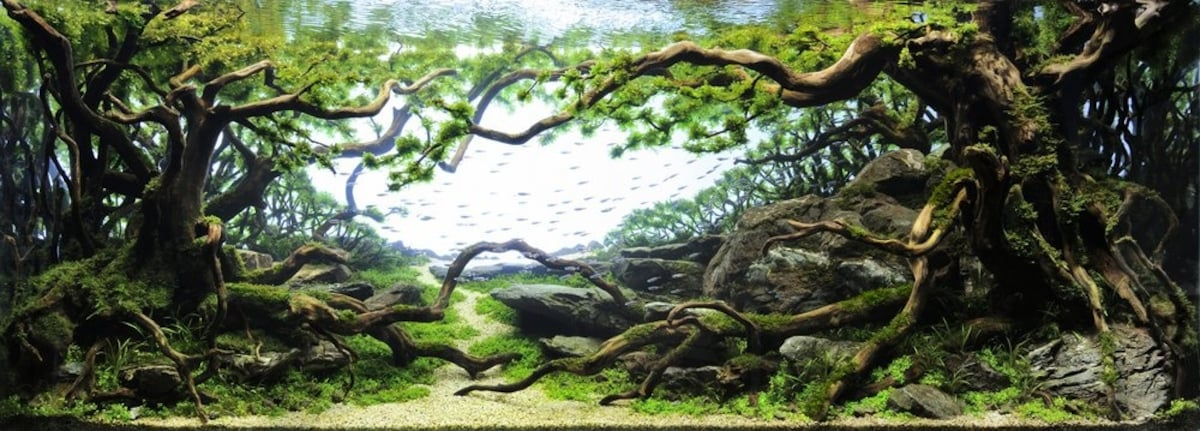 Exceptional Tokyo Aquascape Union Makes Aquarium Art