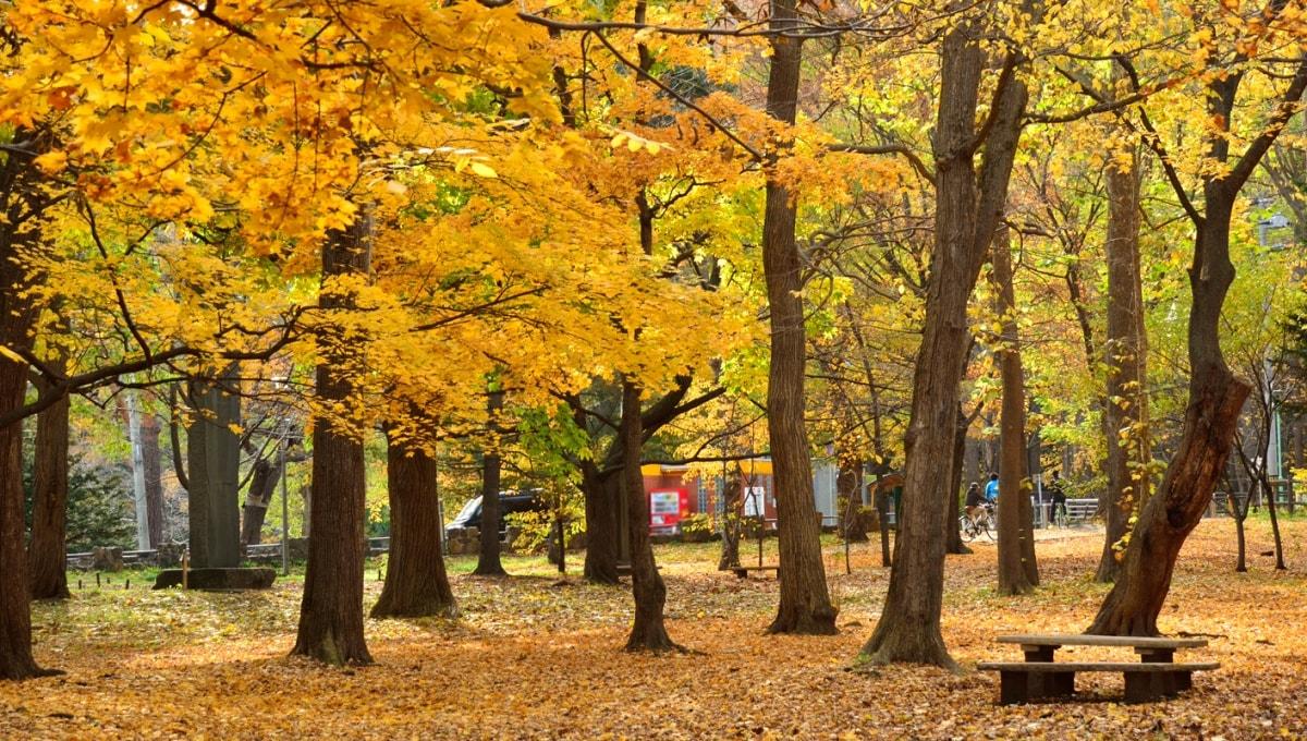 4. Maruyama Park