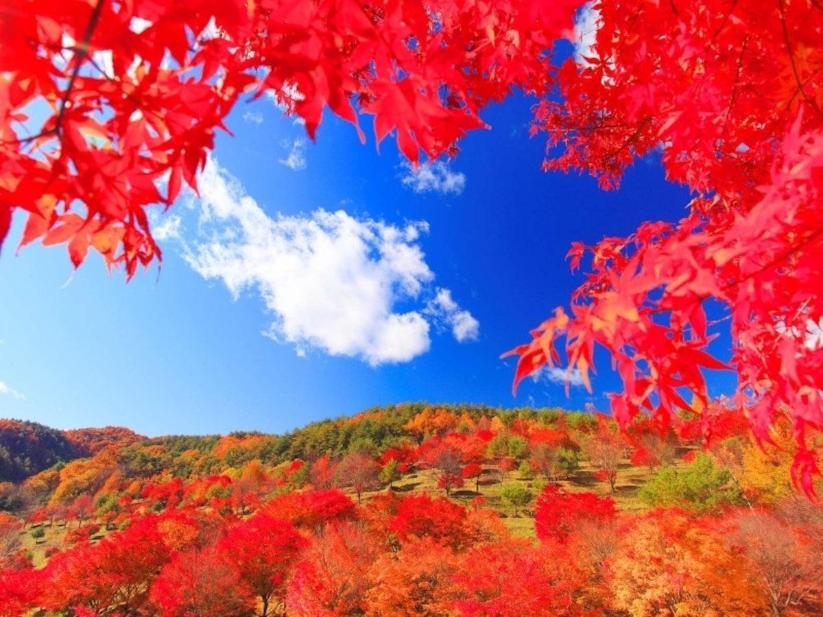 紅葉湖(箕輪大壩)【長野縣箕輪町】