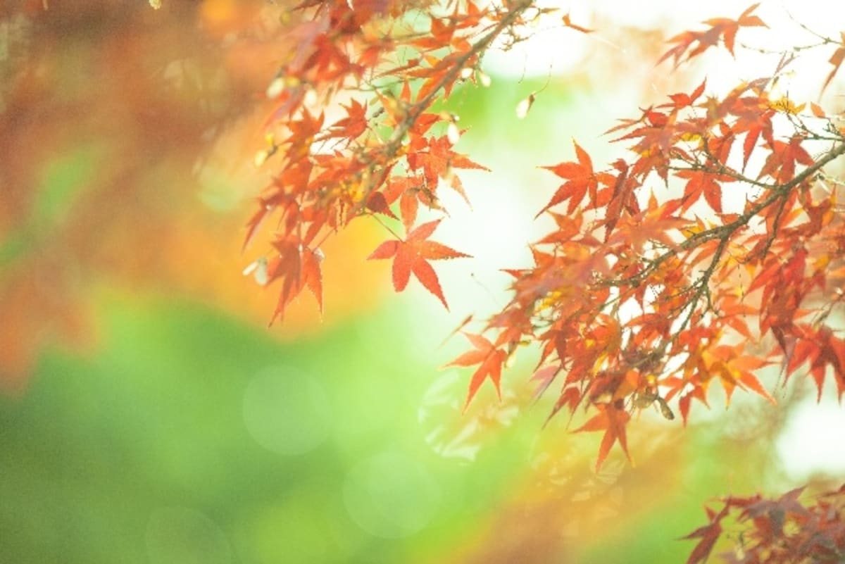 5. Capture the Leaves at a Time of Day When the Light is Soft